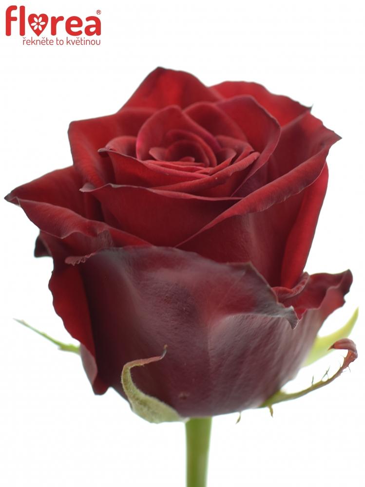 Dortová kytice Rudé růže - rozvoz, dárek