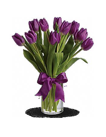 Kytice fialových tulipánů - rozvoz, dárek